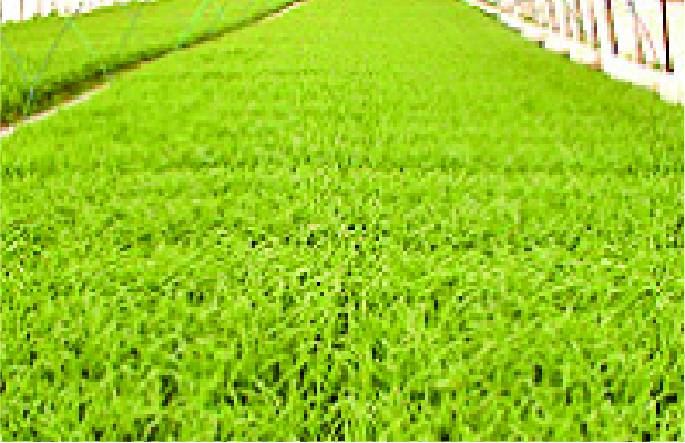 播種・育苗作業